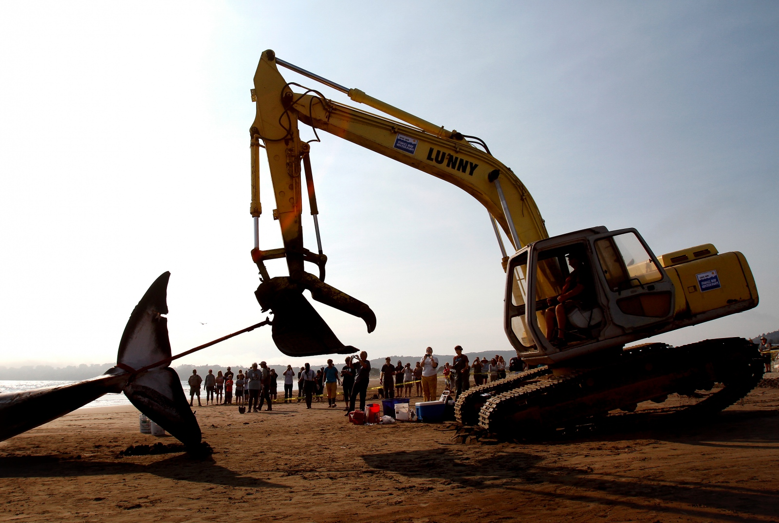 Art and Documentary Photography - Loading whale20_18T.jpg