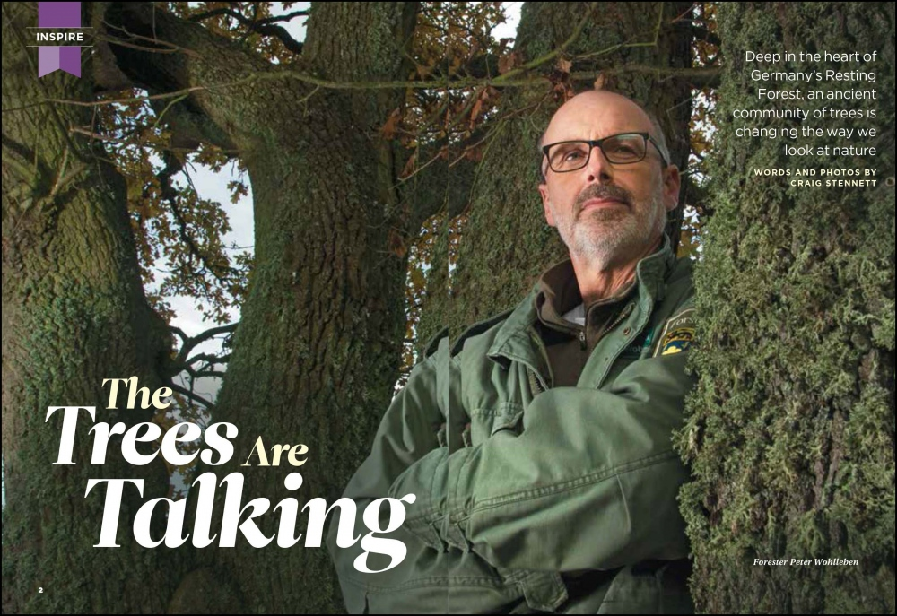 Photography image - Loading The_Trees_Are_Talking-1.jpg