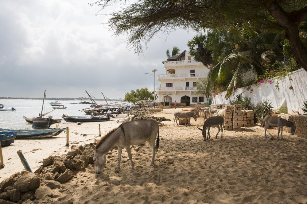 Lamu: Island Life on the Swahili Coast