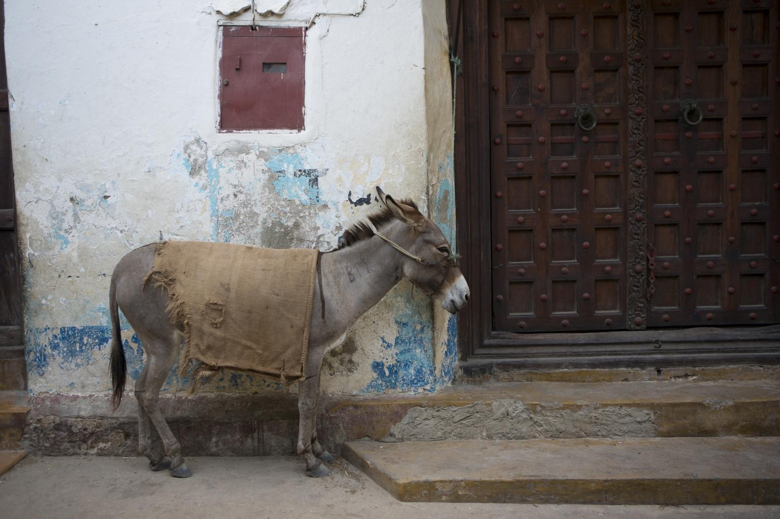 Art and Documentary Photography - Loading lamu-7.jpg