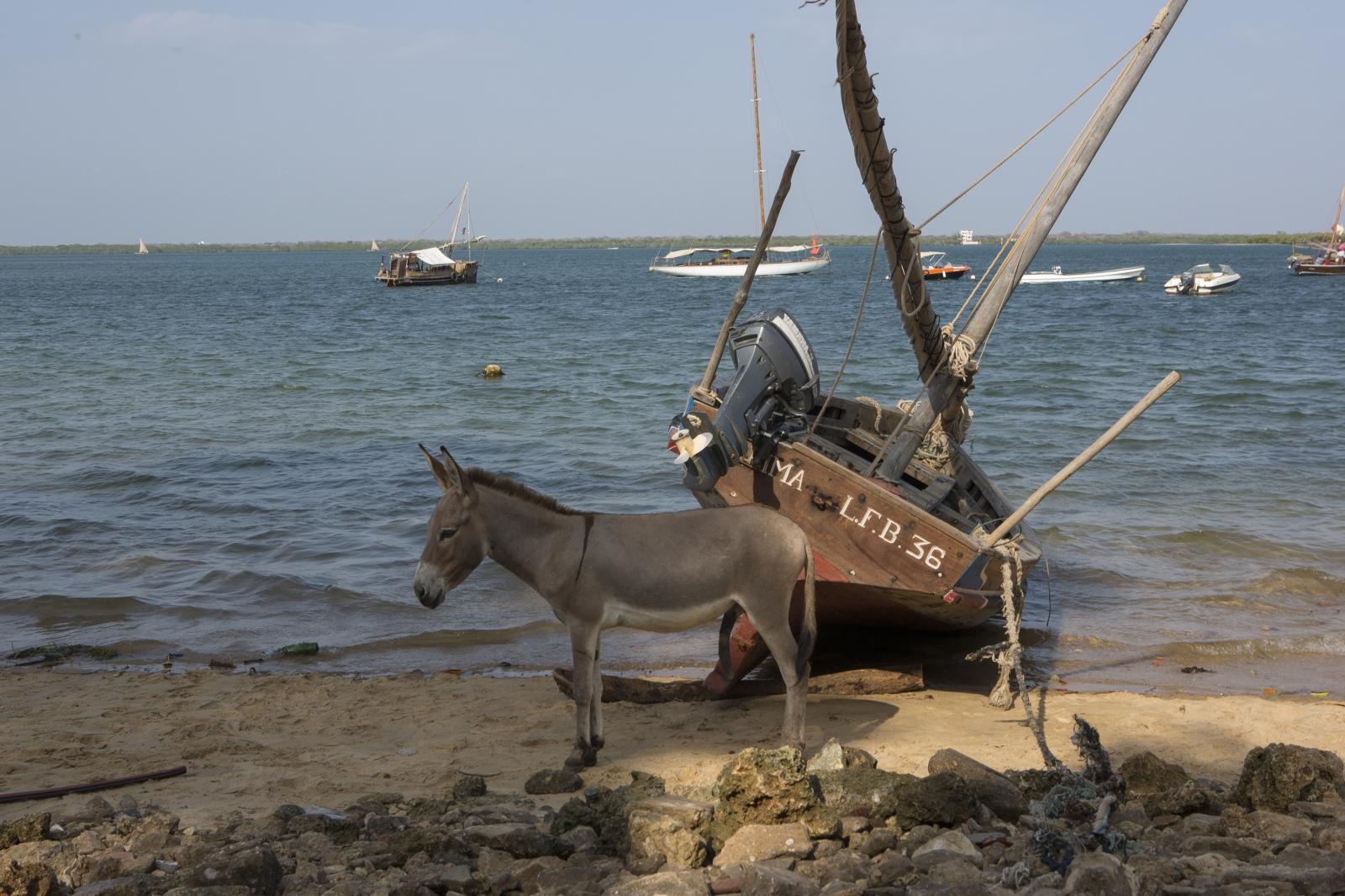 Art and Documentary Photography - Loading lamu-18.jpg