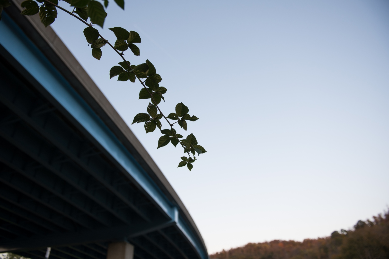 A blackberry branch grows on Farm 18 beneath an overpass in East Wheeling. The construction of the highway through this area led to the destruction of some of the neighborhood's buildings. The urban farm, which is tended by the organization Grow Ohio Valley, now helps provide fresh, healthy produce in what is often considered a food desert.