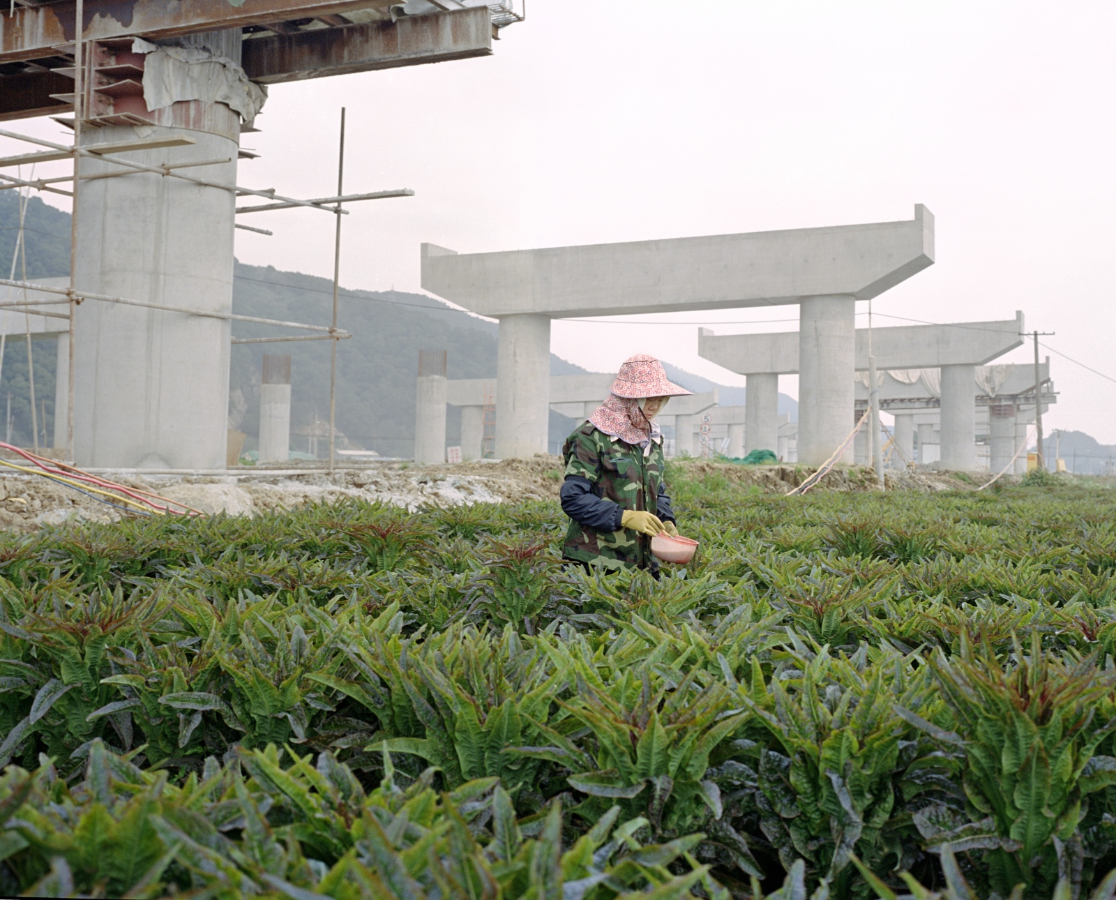 Urbanization, Lang Qi island 琅岐岛