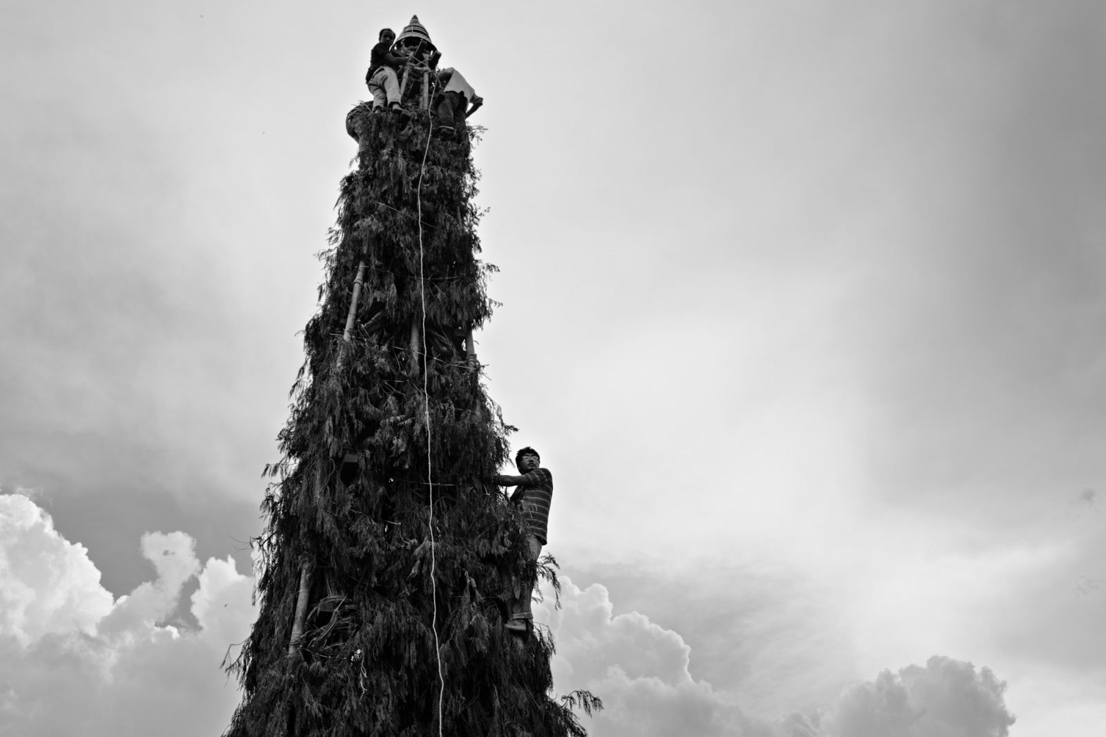 Young men climb a giant spire made of bamboo and pine branches, that sits on top of a wooden chariot. This is a festival meant to bring rain.
