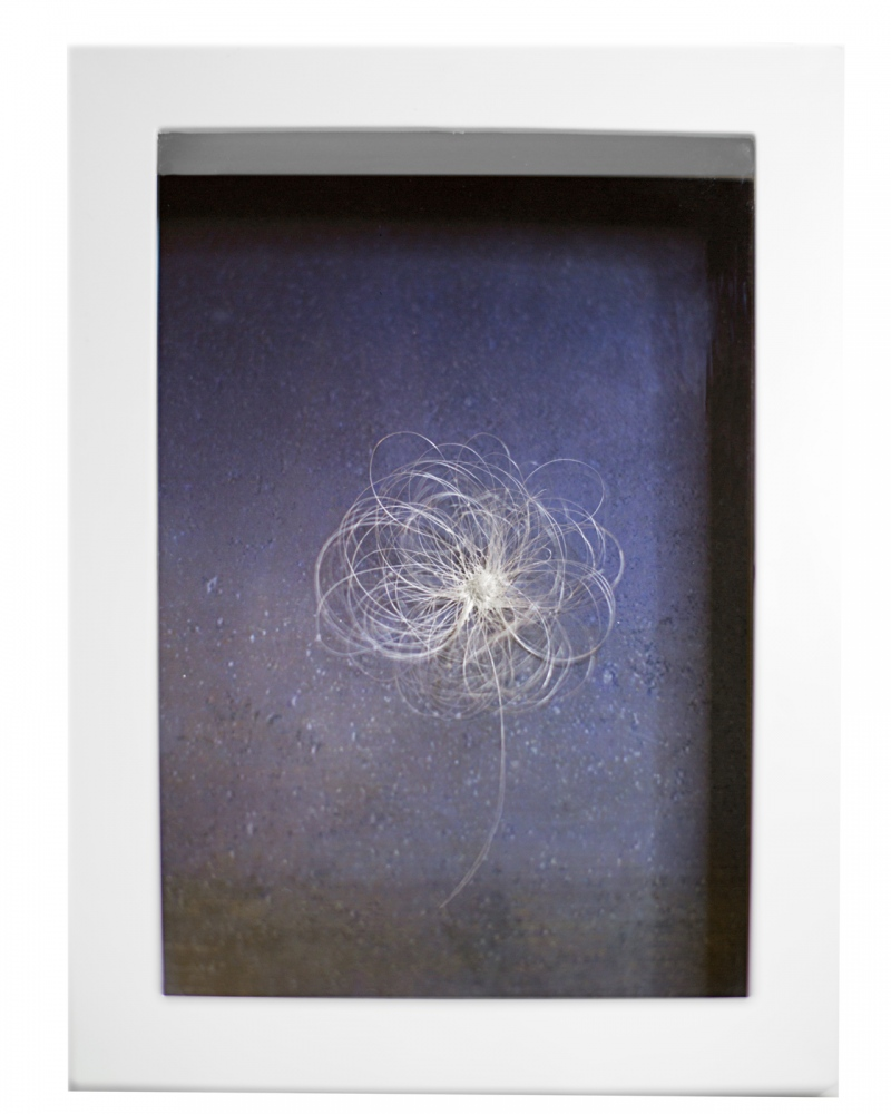 "This is Not a Flower, 2017 6 x 8 x 1.25"" Frame 5x7 Archival pigment print The background image is a compilation of 185 night landscape images carefully merged to resemble a starry night with grass. On top of the image is a sculpted flower made out of grey hairs I either pulled or fell off naturally within the course of six months or 185 days."