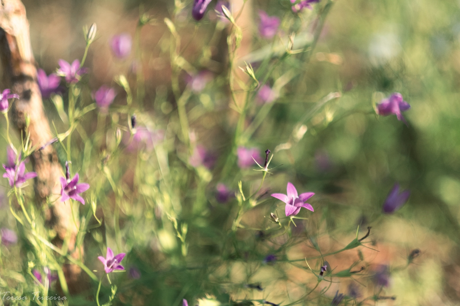 Art and Documentary Photography - Loading DSCF2976-Edit.jpg