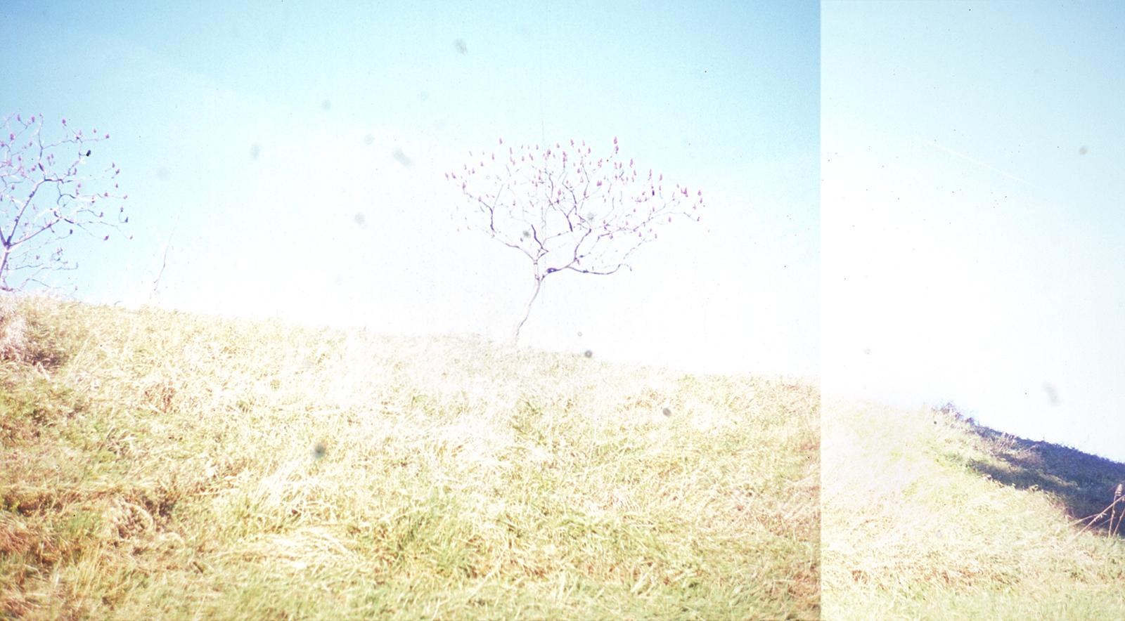 Art and Documentary Photography - Loading 04_lightsumac2.jpg