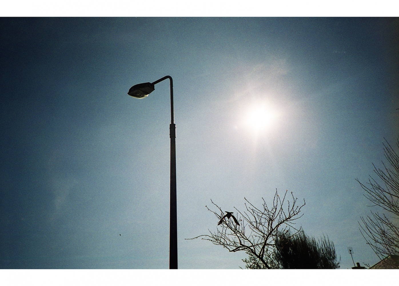 Bird, Lamppost, and Sky