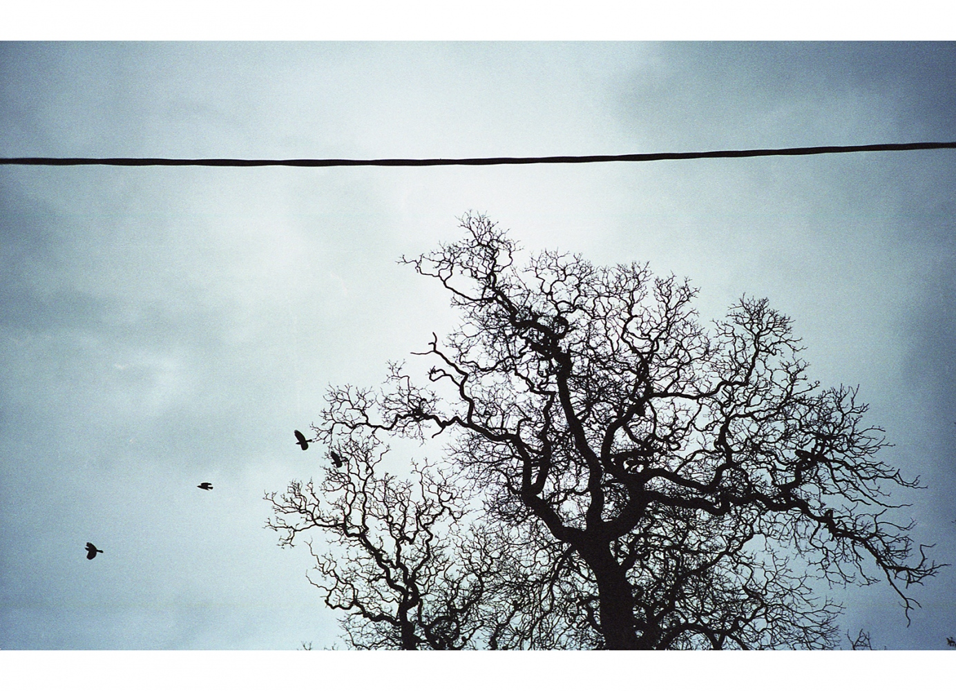Tree, Birds, and a Power Line