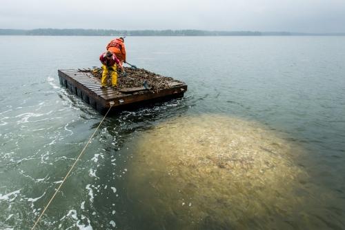 Restoring a Great Bay