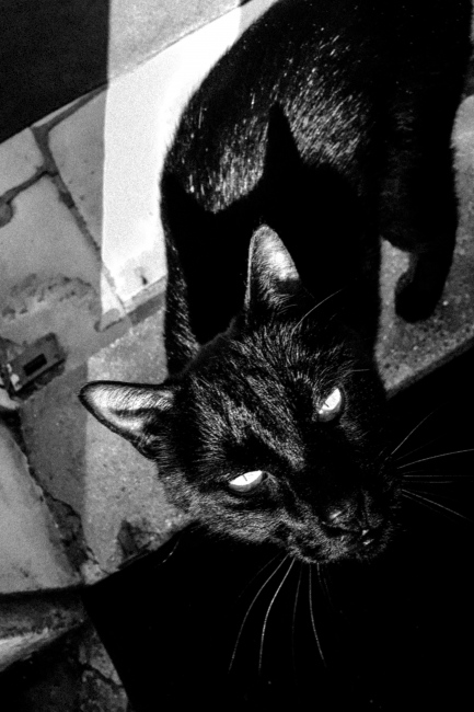 Photography image - Sitting in the sun with an old friend. The black cat announced IT.