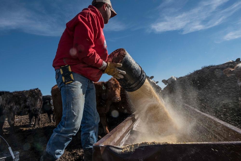 Photography image - Loading RanchingontheReservation0040.JPG