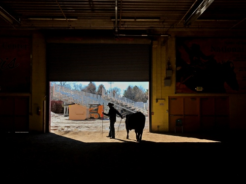 Silhouette of a rancher at a cattle auction in Twin Falls, Idaho.