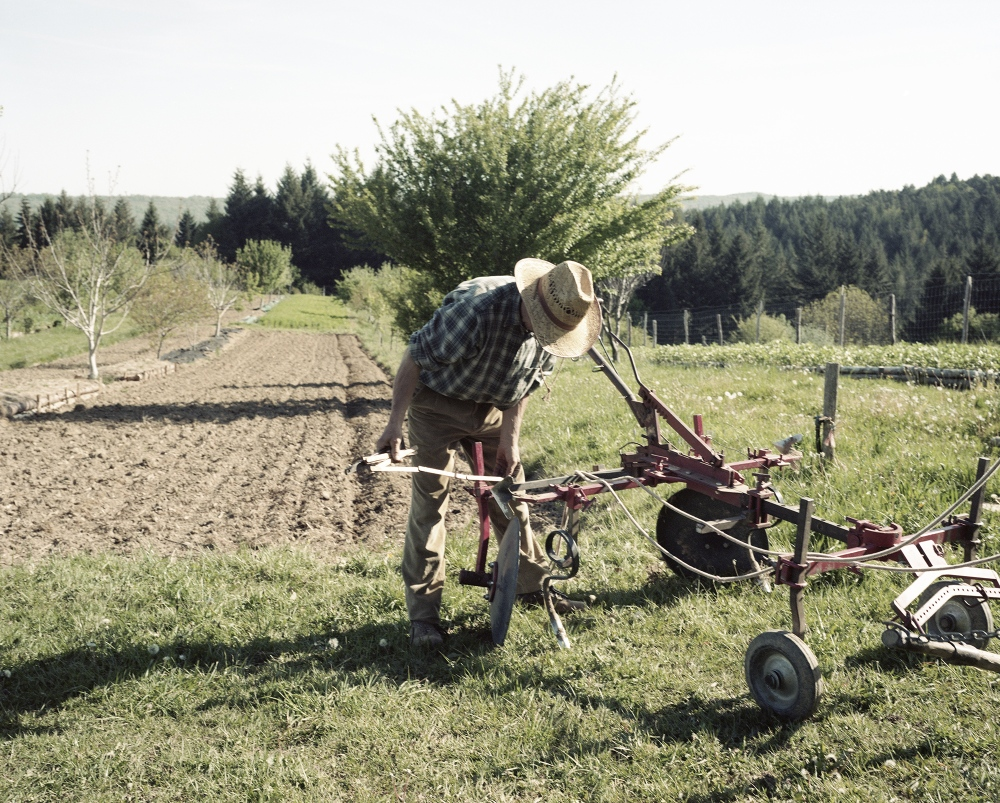 France,Camarade. Mr Roberto work on his fields. Mr Roberto is part of an association named Prommata that project modern agriculture machine to allow farmers to use animal traction for the field work.