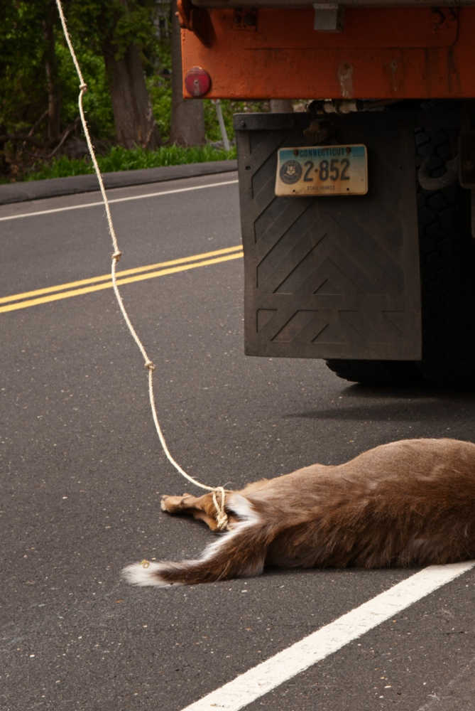 Each Department of Transportation region, must come up with their own method of picking up deer off the roadways.
