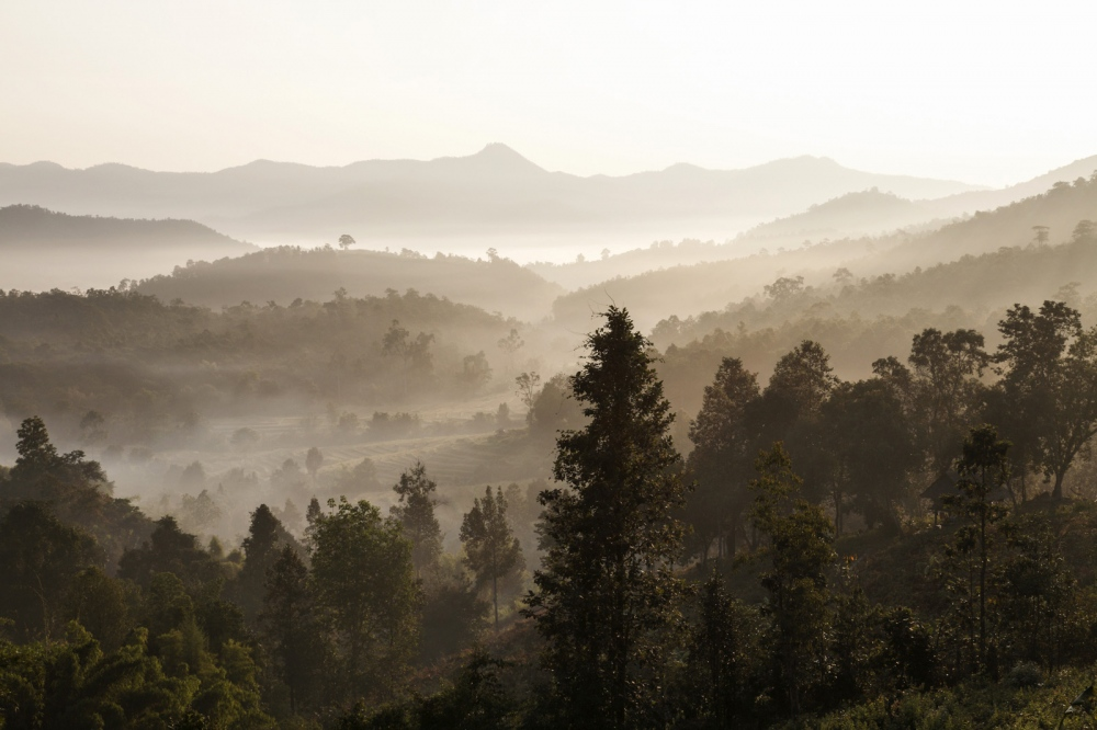 Remote forest valley.  Chiang Mai Province - Thailand