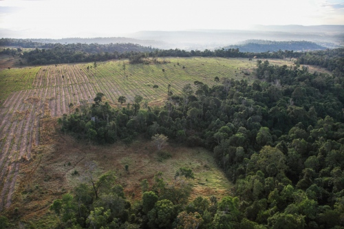 Large areas of forest looged to make way for plantations.  Cardamom Forest - Cambodia