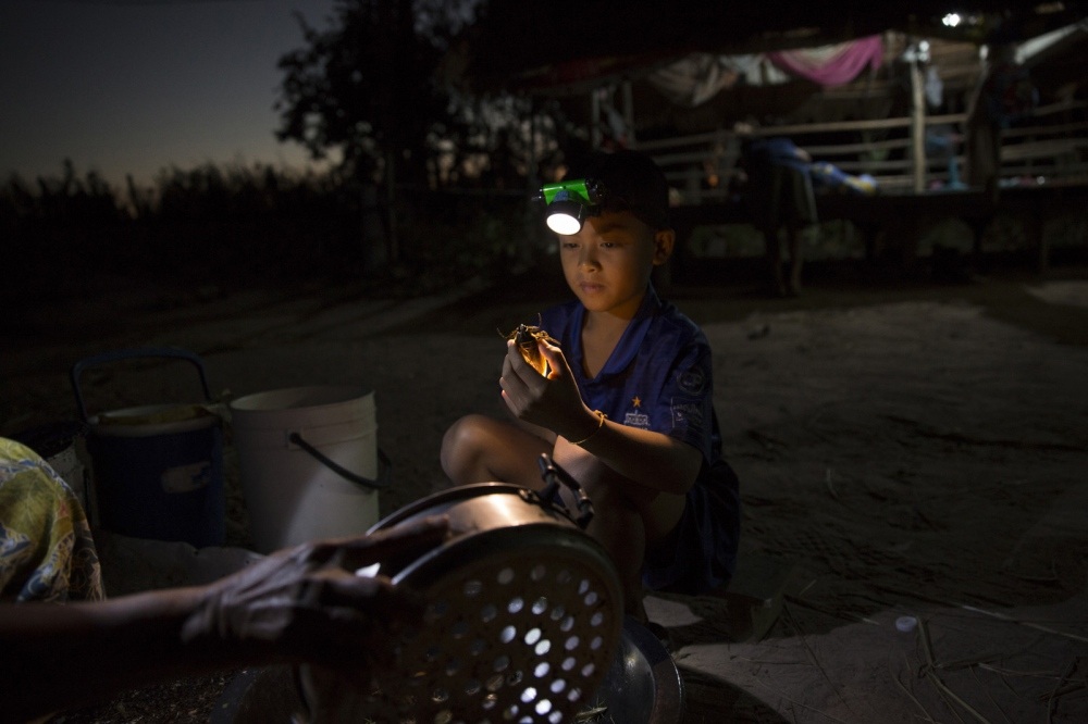 A young boy helps his mother sort out the insects caught that night before getting ready to go to school.  Buriram Province - Thailand