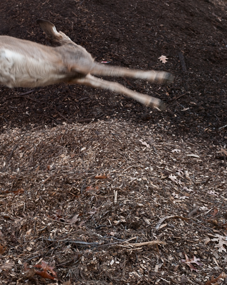 A small deer is tossed onto the compost pile.