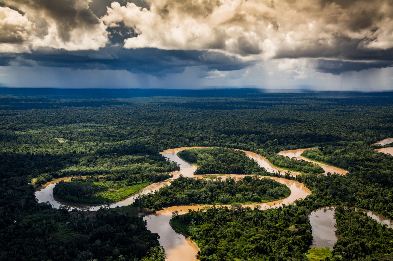 Peruvian Amazon. Alto Purús National Park, Peru.