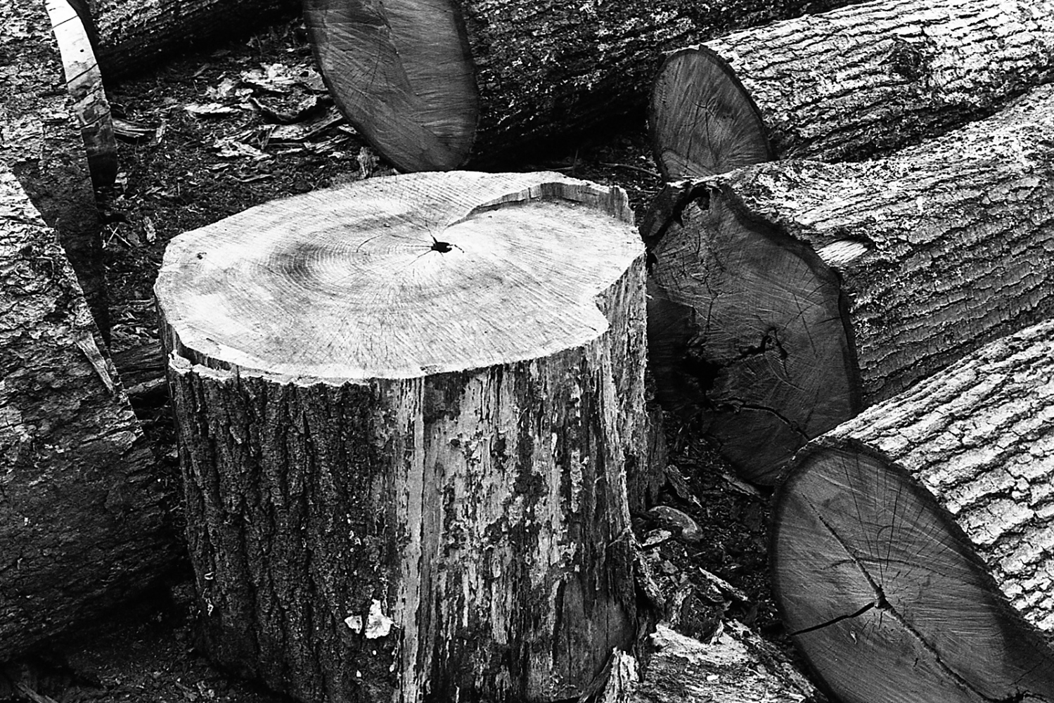 Art and Documentary Photography - Loading oak_logs_lymect_2016_31.jpg
