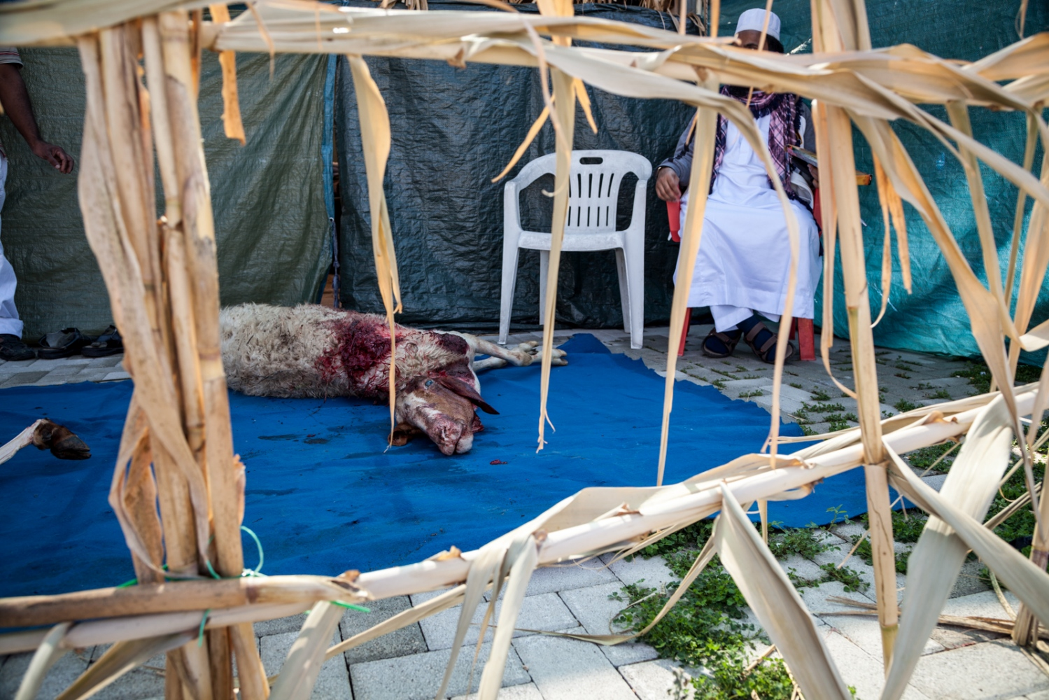Oct. 4, 2014 - A man sits next to one of the nine sheep that have been killed by some members of the muslim community, to celebrate Eid al-Adha,  in Torpignattara, a working class neighborhood in southeastern Rome.
