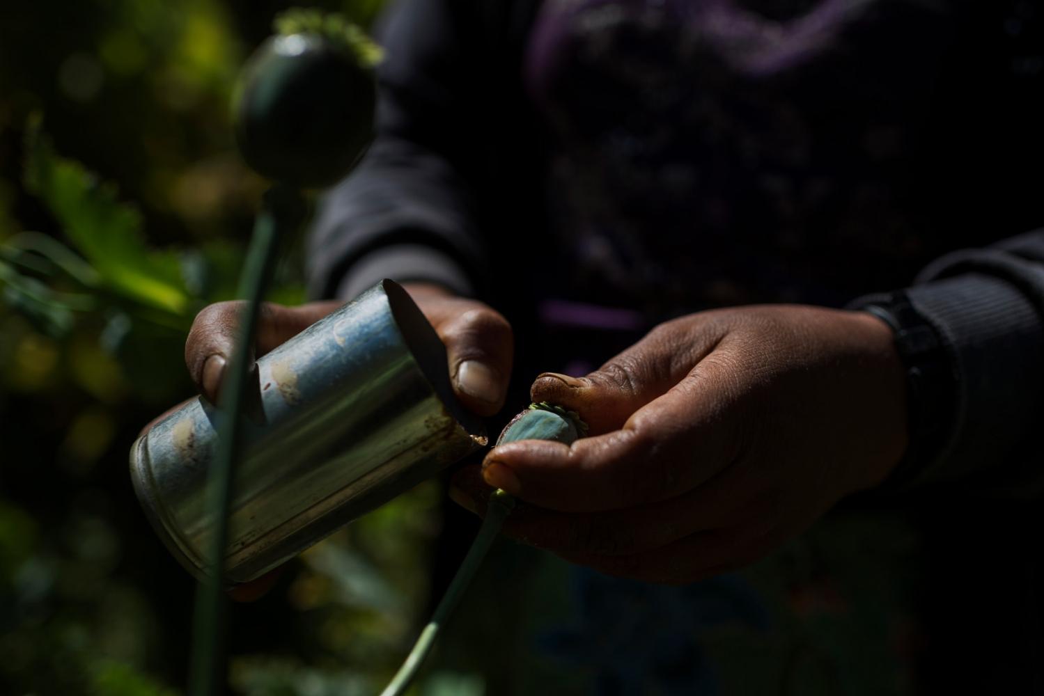 Art and Documentary Photography - Loading VS-Myanmar-drugs-06.JPG