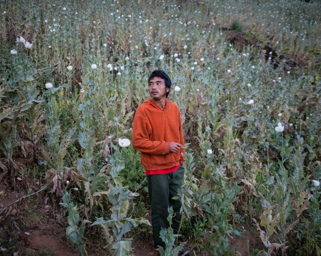 A opium farmer takes a smoke in the morning in his poppy filed deep in the mountains of Shan State, Myanmar. He owns the village´s largest field and support his while family and parents on the income of around $ 1000 dollars per season.