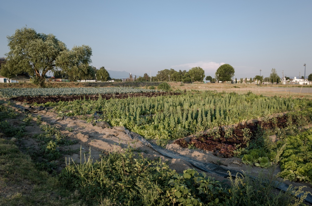 April, 2017. San Andres Cholula. A lot of the people living nearby don´t realize how much the place they live in can produce. Puebla is a very fertile land thanks to the closeness to the volcanoes. Farmers growth here all kinds of vegetables like; lettuce, broccoli, coriander, corn, kale, carrots, onions….