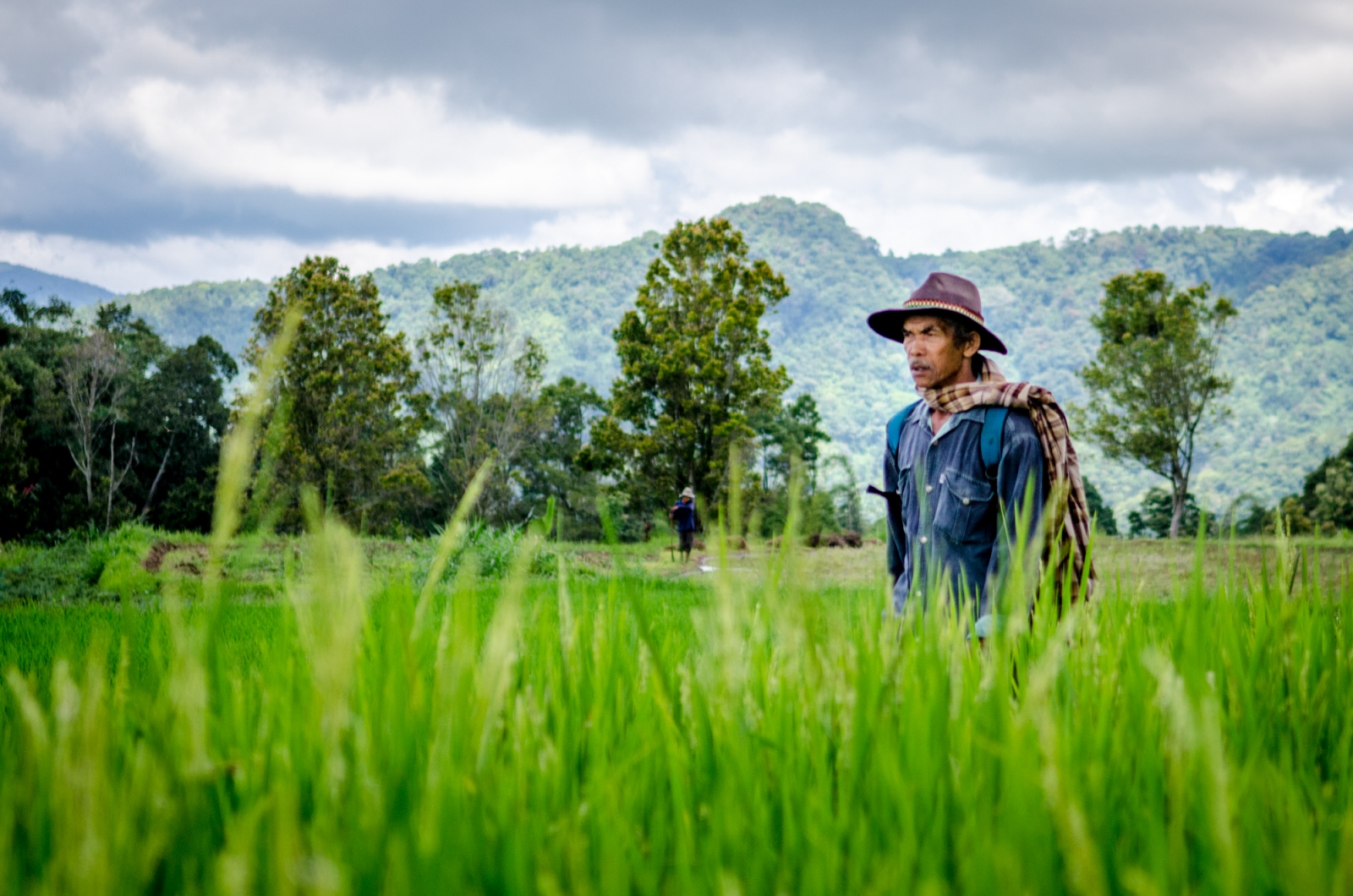As the rice paddy is drained and the bulls are brought in, spectators begin to arrive, walking carefully along the narrow pathways through the fields and paddies that have not yet been harvested. The Indonesian sun is not forgiving and most of the West Sumatran crowd adorn unique headwear and scarves.