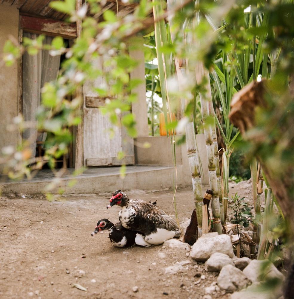 Commune of Jacmel, section Cayes - Haiti.