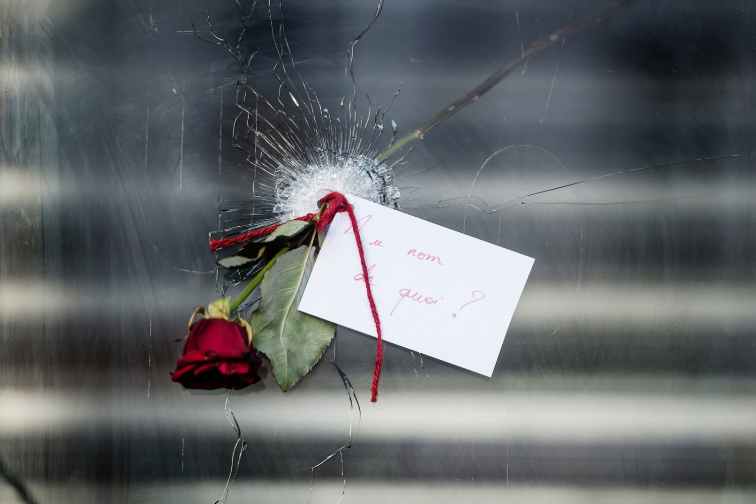 A rose tucked into a bullet hole in a window next door to La Belle Equipe, one of the restaurants targeted in the terrorist attacks in Paris that left over a hundred people dead.