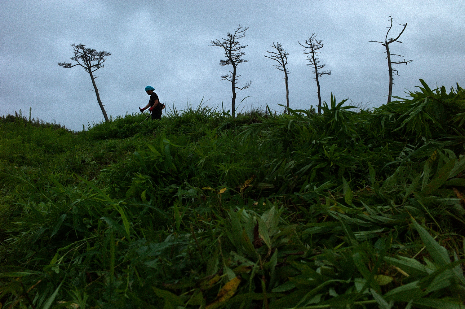 Norio Kimura(52) is clearing out weeds at his farmland in Okuma town. His former home is located inside the exclusion zone in Fukushima.