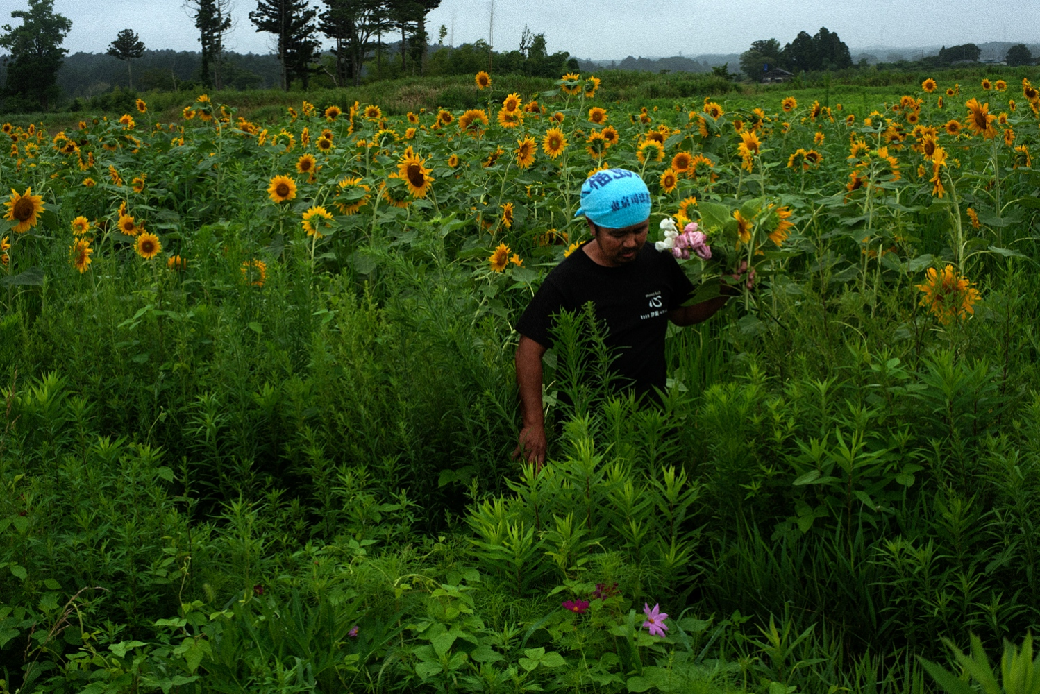 Norio Kimura(52) is picking up flowers for his family graves near by. He has been tended a garden to commemorate for his missing daughter inside the exlcusion zone in Fukushima.