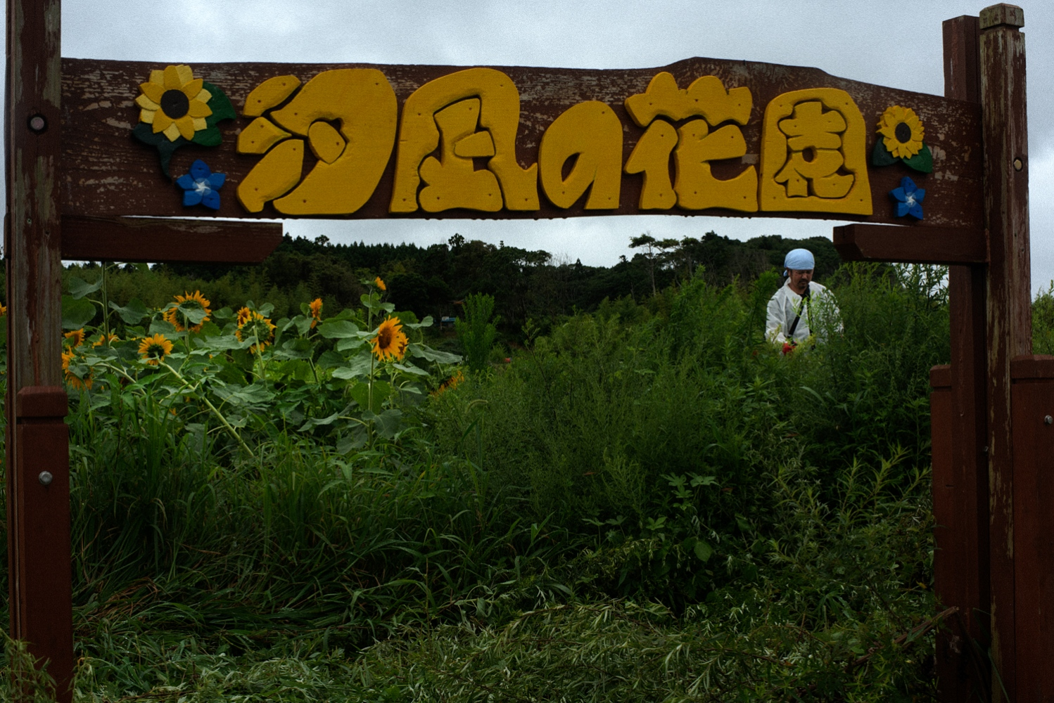 A flower garden named after Norio Kimura's daughter was created by Norio at his former home inside the exclusion zone in Fukushima.