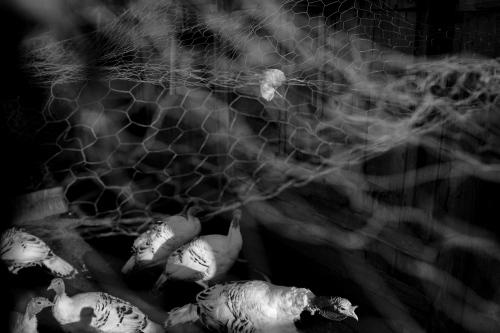 Owls Head, ME. 2013