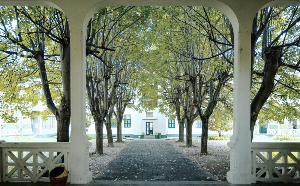 Escola Infante D. Henrique's magical trees