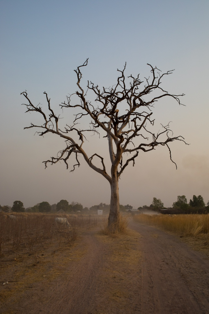 Art and Documentary Photography - Loading Senegal2017_795_February_17__2016.jpg