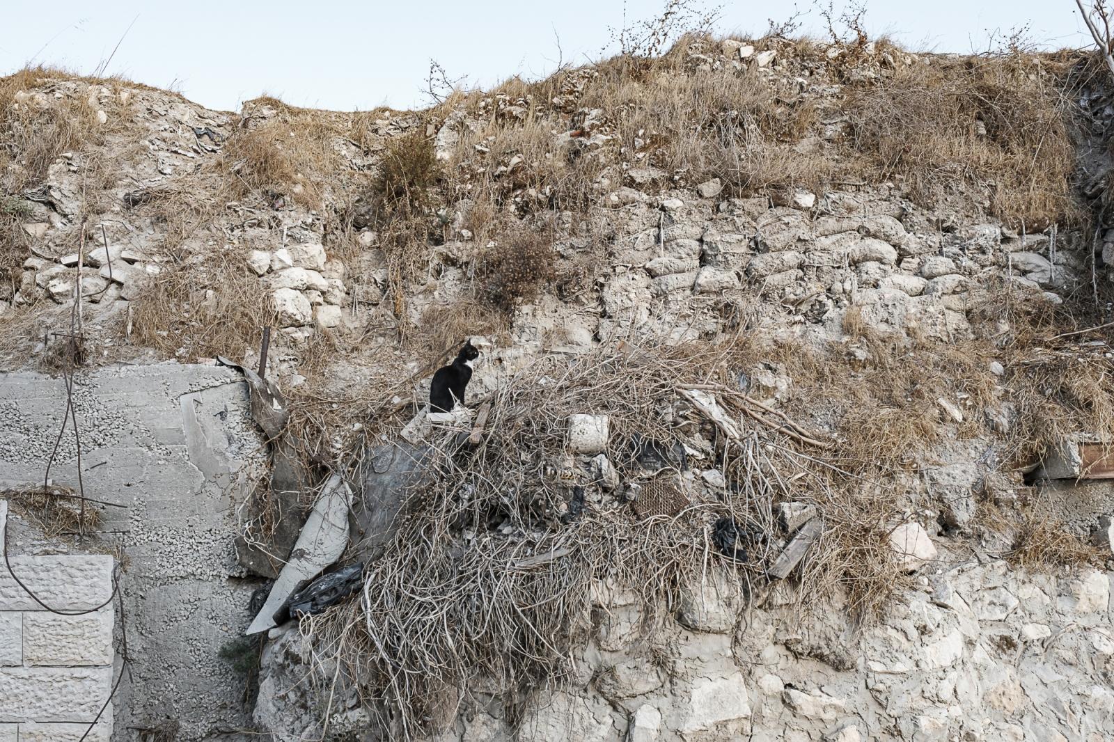 Cat above Jerusalem