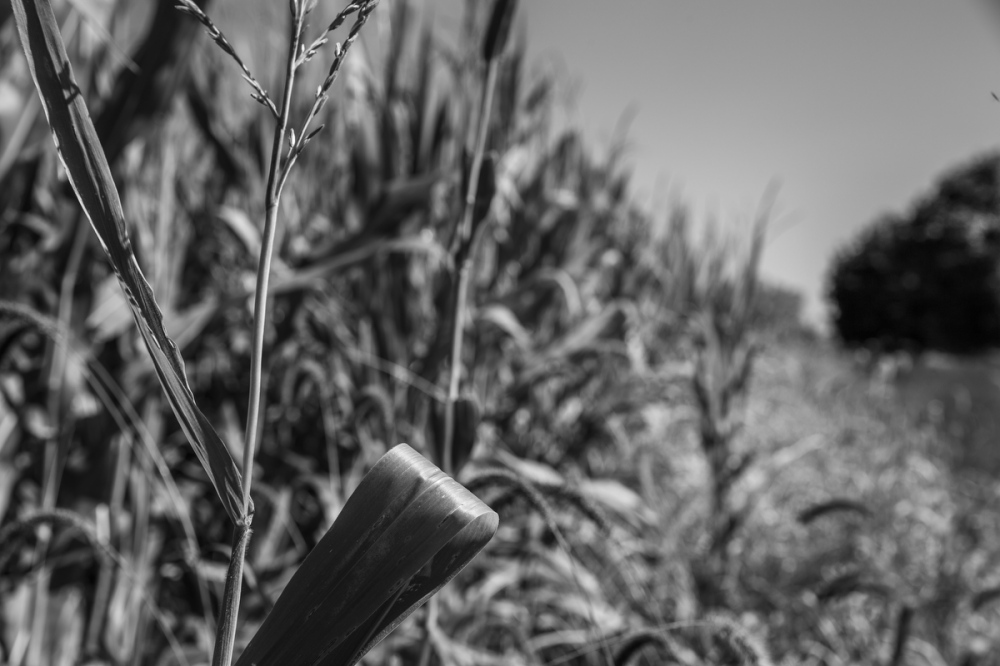 Photography image - Loading 092517_Antietam_218.JPG