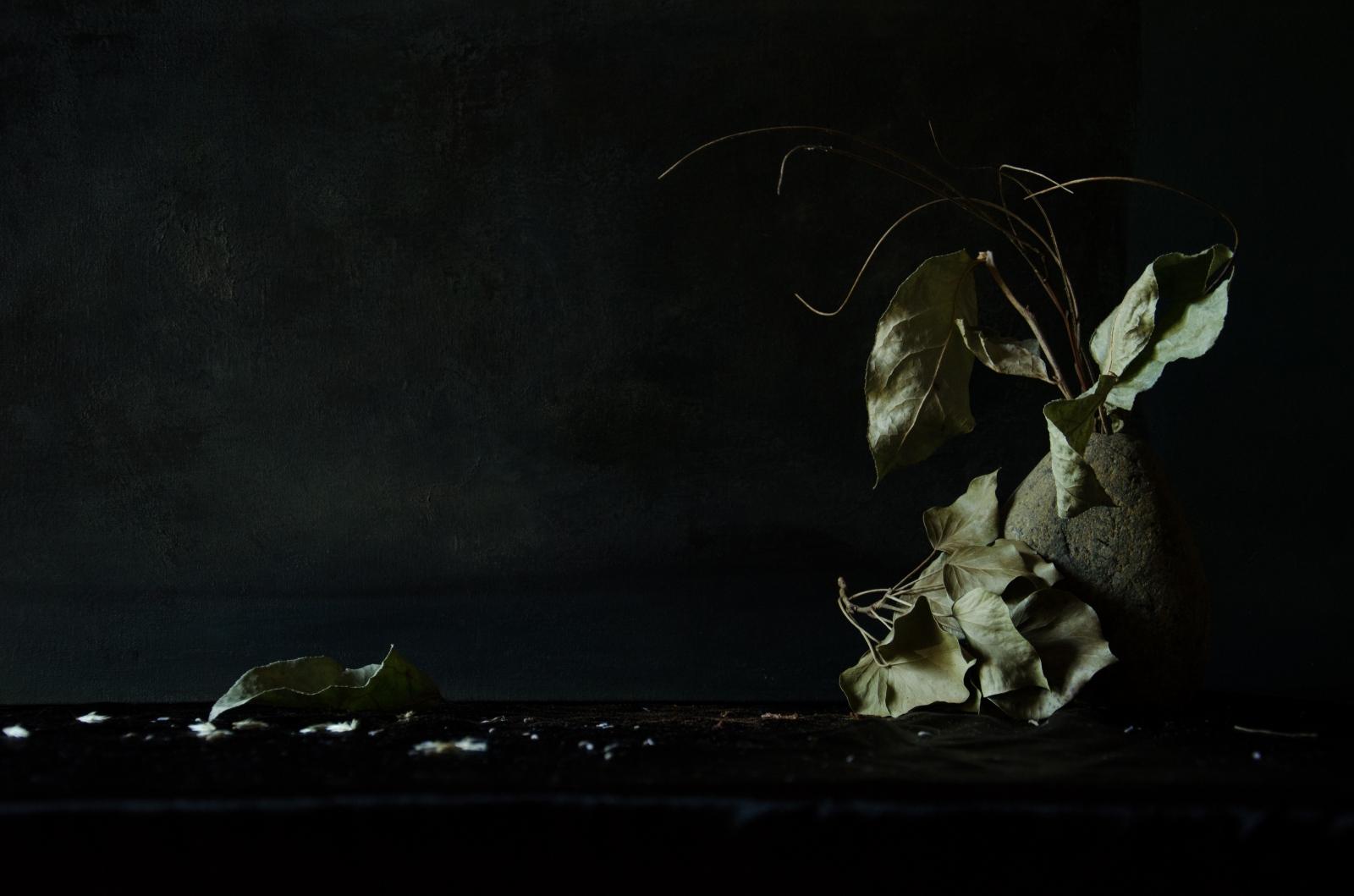 Art and Documentary Photography - Loading DSC_9374.jpg