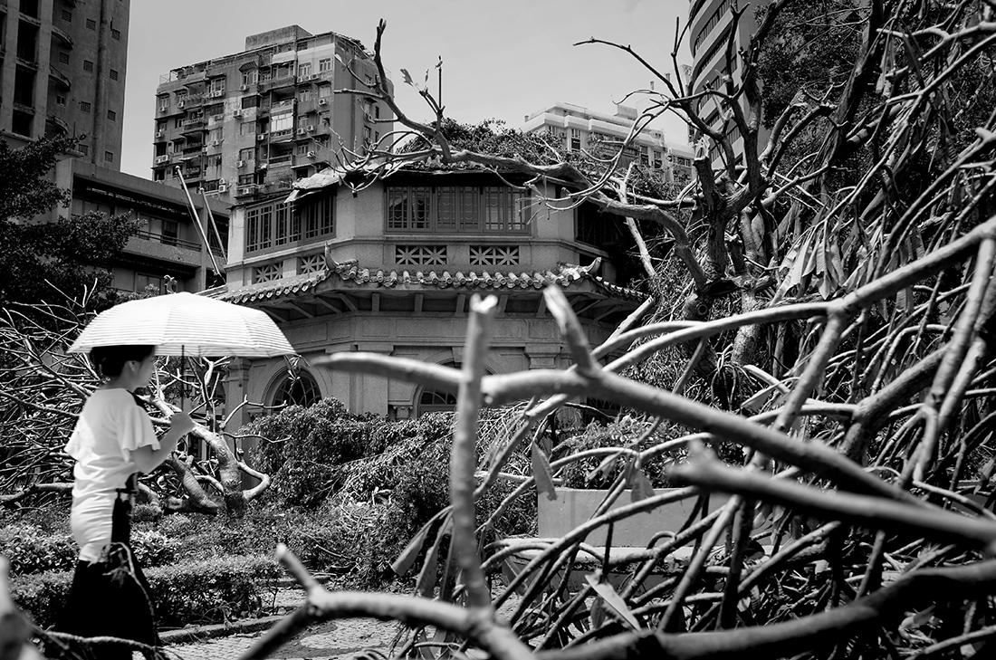 Art and Documentary Photography - Loading Hato_06.jpg