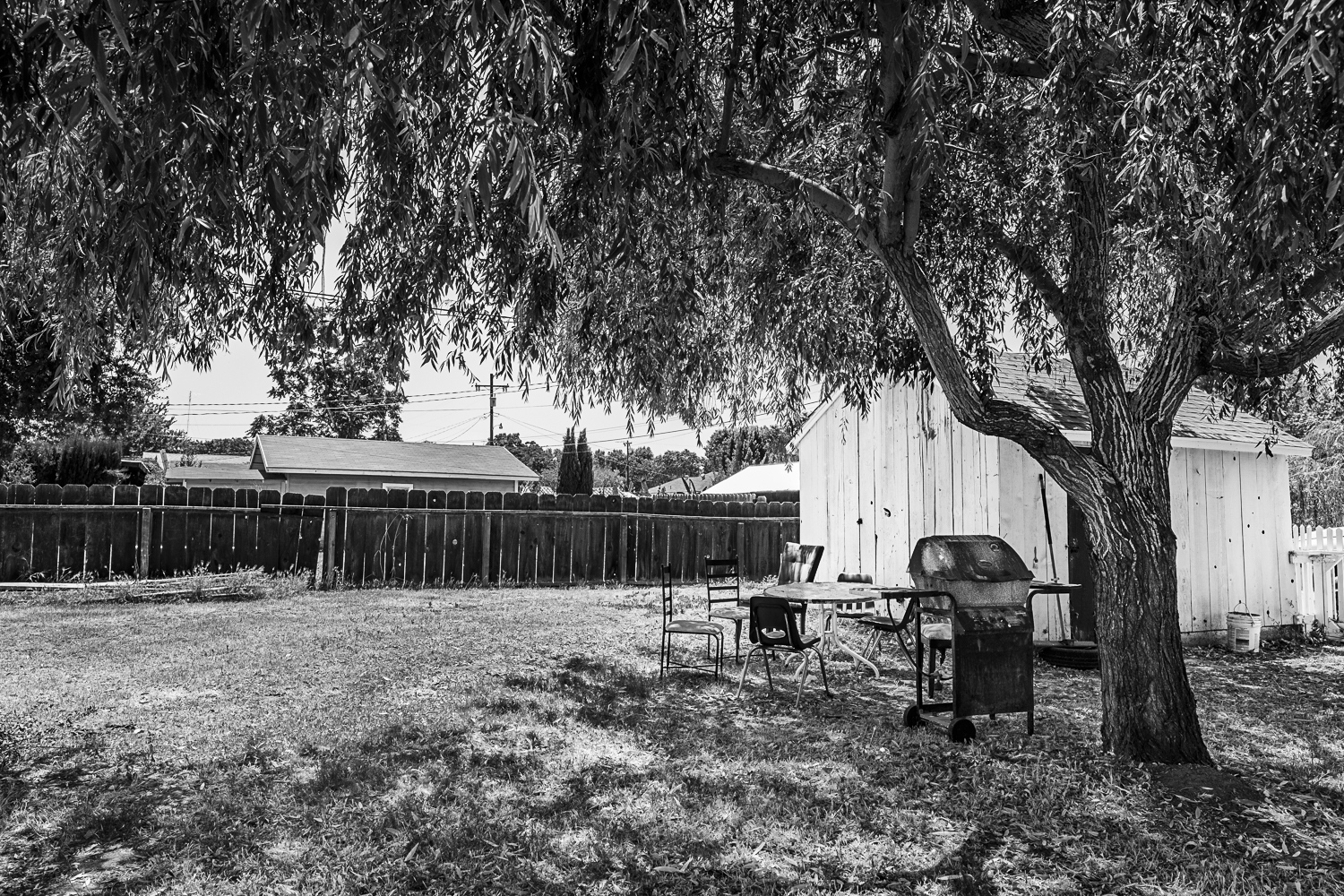 Backyard Gustine, Ca 2017