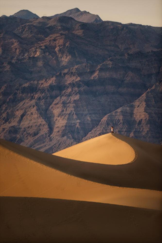 Art and Documentary Photography - Loading Desert-Flowers-_1410.jpg