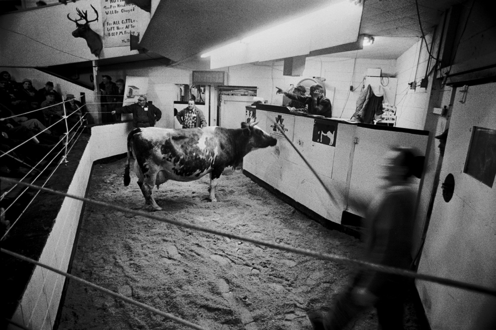 "Burton's Livestock Exchange, Vernon, NY. I spent a couple of years going to livestock, quite an intesting theatrical arene. I was often the only woman there and at the beginning the guys would say, ""it will break your camera little lady."" But after a while they got used to me and barely noticed my presence."