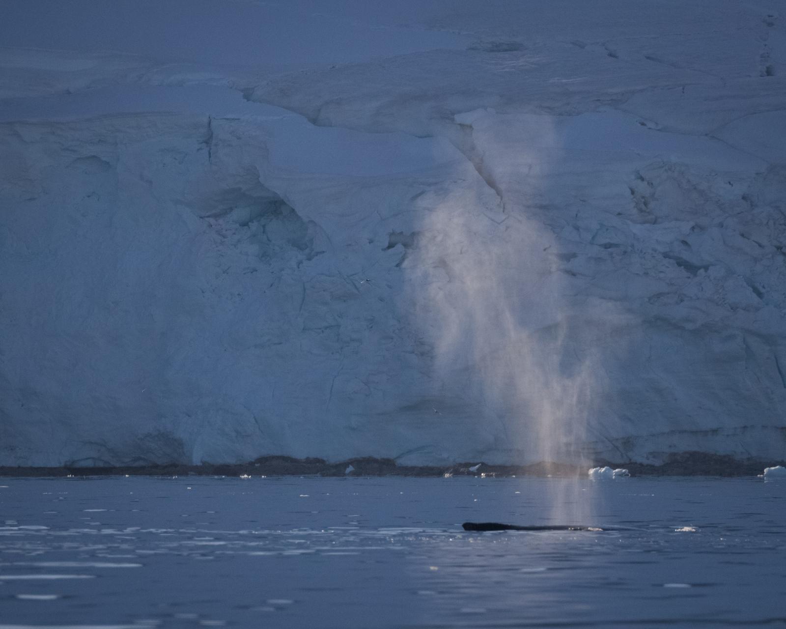 Art and Documentary Photography - Loading 0_Antarctica_UPLOAD_acaciajohnson_9.jpg