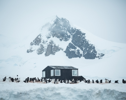 Gentoo penguins nest around part of the Chilean Gonzales Videla Antarctic Base, in Paradise Bay, Antarctica.