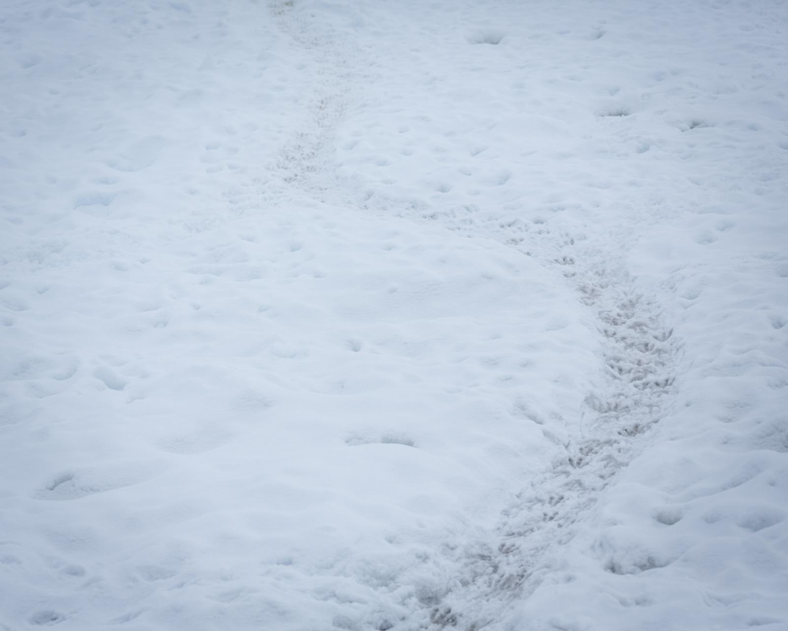 Art and Documentary Photography - Loading 0_Antarctica_UPLOAD_acaciajohnson_22.jpg