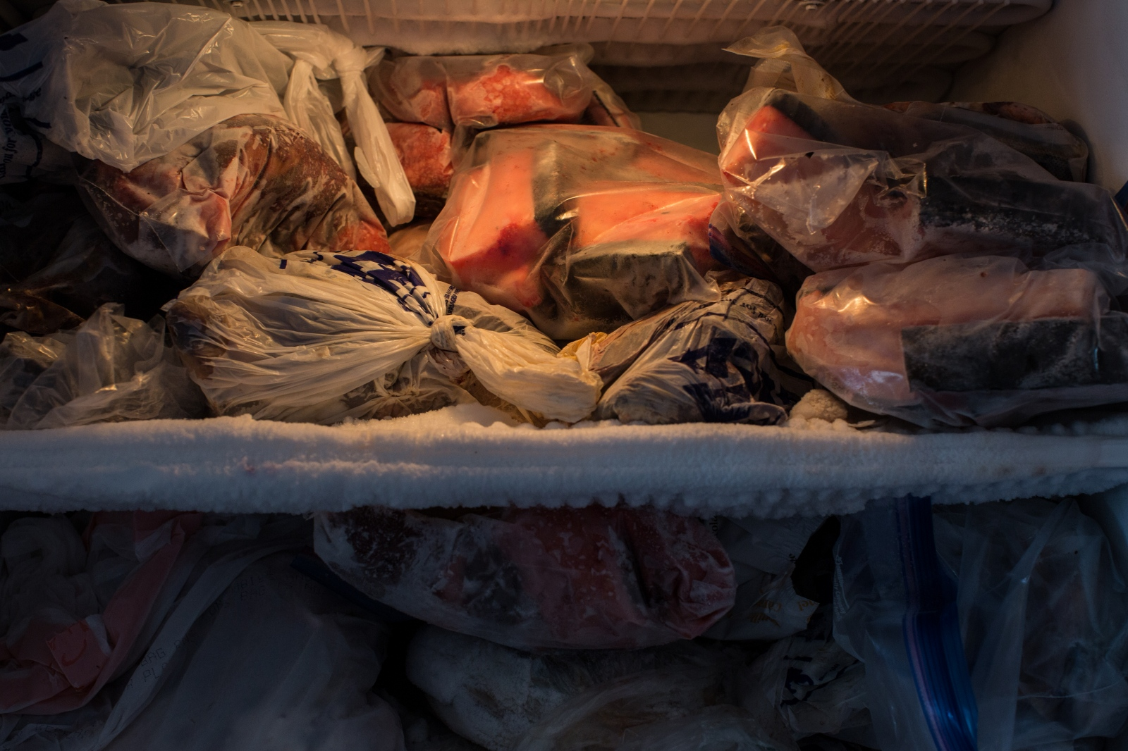 The freezer in the Apassingok home, filled with mungtuk (whale blubber), and other meats.