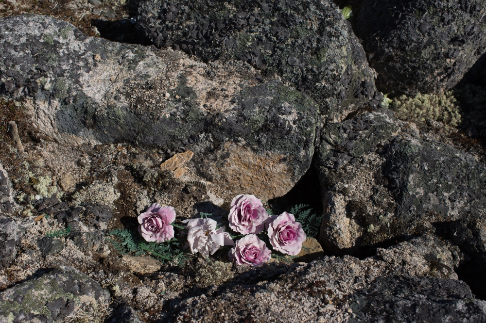 Flowers in the cemetary on top of Sivuqaq Mountain in Gambell, Alaska.